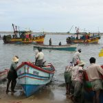 New Platform Opens to Achieve Global Framework for Seafood Traceability