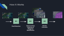 Using AI to assess mangrove impact due to shrimp farming, aquaculture